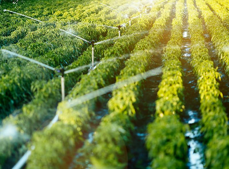 irrigazione idonea alla coltivazione
